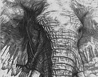 Another Elephant