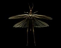 Observations on Animal Form: Arthropoda