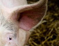Dans le cochon tout est bon...