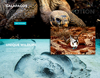 GoGalapagos Website Concept