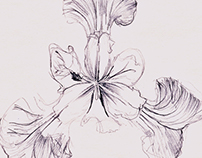 IRIS handmade sketch