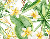 Tropical Watercolors