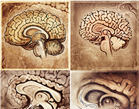 Brain Structures Illustration