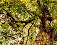 SG /// TREES