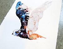 Lifting his wings