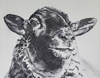 """sheep"" 80x100cm"