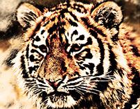 Sharp Tiger