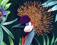 Crowned Crane pattern