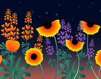 Wildflowers Animation