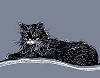 Cat Illustrations