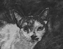 Cat Scratch Board