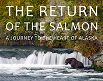 The Return Of The Salmon