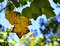 Prelude to Autumn - Part 3