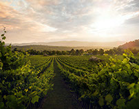Sirromet Winery