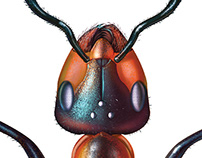 The Red Wood Ant
