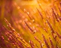 Summer - love - bokeh - sunlight - dream - zen