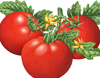 Fresh & Sun-Dried Tomato Illustrations of  Past 25 Yrs