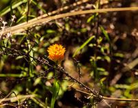 April In The Pitcher Plant Bog