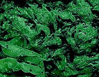 Emerald Algae