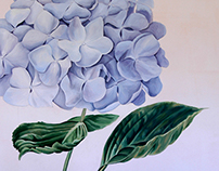 Hydrangea/ wall decoration