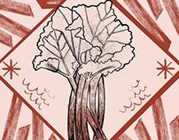 Saturday Kitchen Week Twenty: Rhubarb