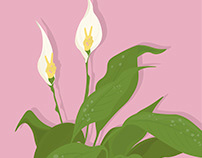 Lilian the Peace Lily.