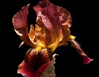 Dancing in the Light - An Iris Fantasy