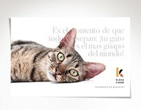 Elena Kaede - Fotografía de mascotas