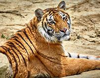 常州野生动物园
