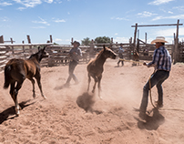 Babbitt Ranch Cowboys  Working