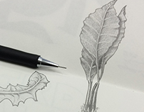 Plant sketches