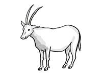 scimitar oryx or scimitar-horned oryx Endangered Wildli