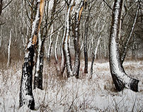 -Winter Forest II-