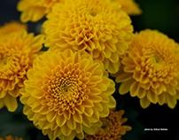 Cute flowers #2