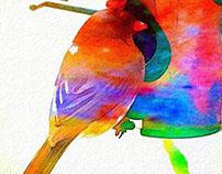 Colors V