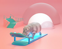 hippo on treadmill