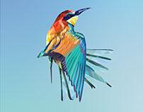 Bee eater vector bird illustration