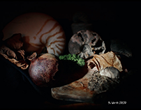 Stilllife with ammonite