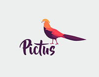 PICTUS PAINT IDENTITY