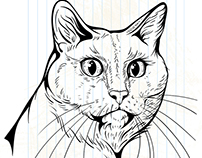 illustrations of cats