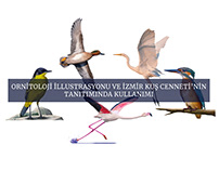 2021 Bitirme Projesi: Ornitoloji İllüstrasyonu