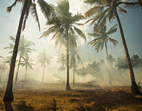 Burning palm trees, Lombok - Indonesia