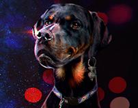 Dogs Concept Photobash