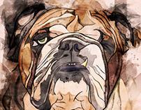 Illustration: One Eyed Willy The British Bulldog