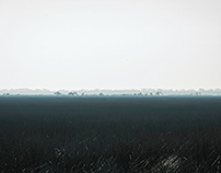 Georgia Swamp.