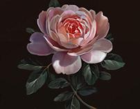 Roses. Procreate process