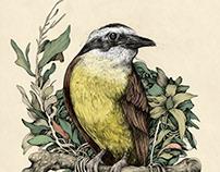 Ink & Birds