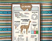 V I C U Ñ A - Infographic