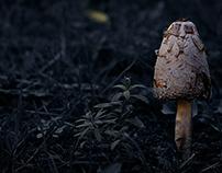 """""""mushrooms"""""""
