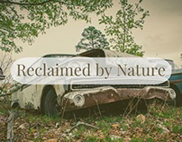 Reclaimed by Nature